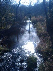 A creek that runs through the first mile of Waterfall Glen