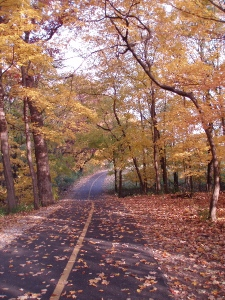 Autumn in the North Branch Trail